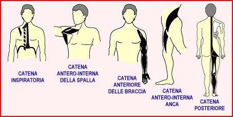 Catene muscolari di Mezieres e catene muscolari di Souchard